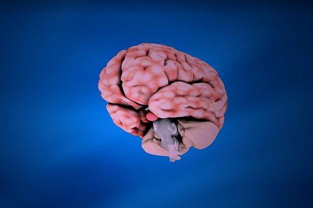 Cervello. Anche a 80 anni continua a produrre cellule